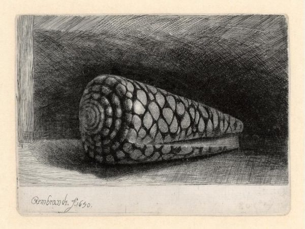 Rembrandt etchings: The shell, 1650