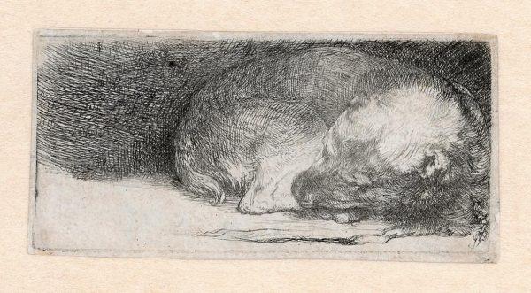 Rembrandt Slapende Hond